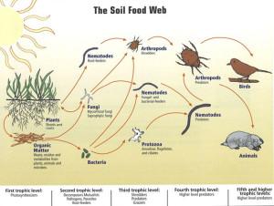soil-food-web01-lg
